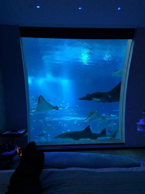 underwater hotel room beautiful underwater hotel room jpegy what the was meant for