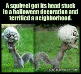25 best squirrel humor ideas on