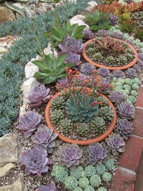 tips to grow succulents outdoors
