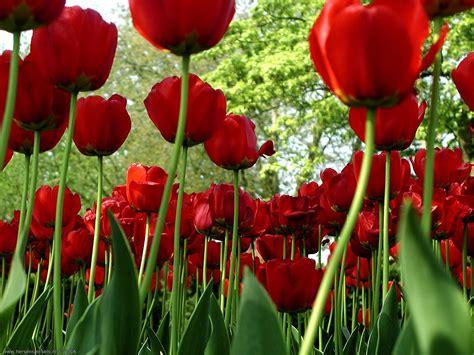 Top Bunga top wallpaper bunga