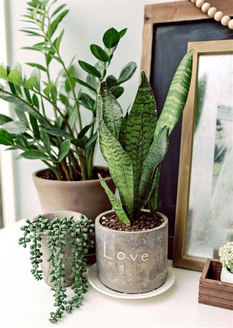 interior design plants  house pictures plant