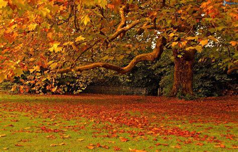 giardino in autunno foglie oltre il cancello pagina 2
