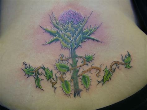 scottish tattoo ideas scottish thistles tattoos designs scottish thistles