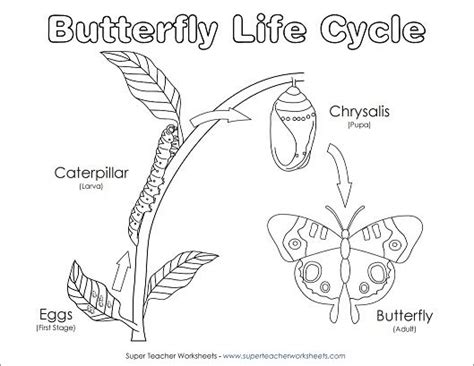 coloring pages for butterfly life cycle your students will have fun coloring this diagram of the