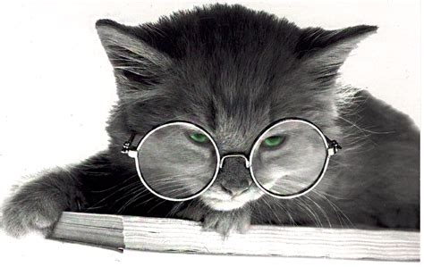 Cat With Glasses Black don t miss it till it s gone klasky author