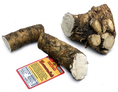 bitter root vegetable 82 best images about s vegetables on