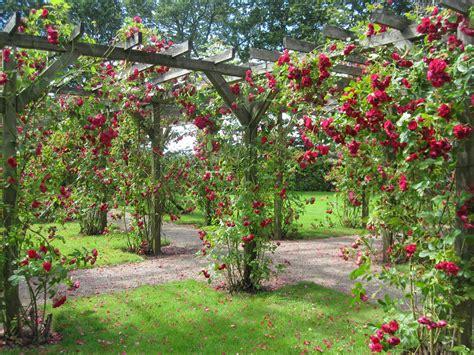 Garden Roses by Like But With A U Jutland Trip Holstebro