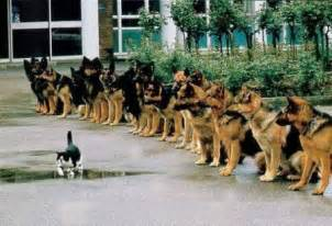 Blind Faith Presence Of The Lord Cat And Police Dogs Funny Cat Pictures