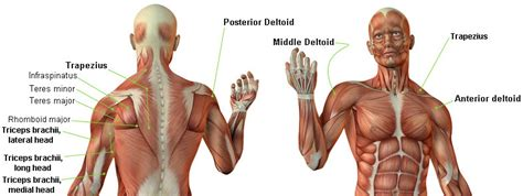 posterior shoulder pain bench press proper dumbbell shoulder press technique video and