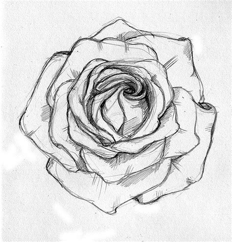rose sketch a friend asked me to sketch out for a tattoo