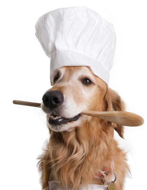 dogs wearing hats dogs wearing chefs hats chefs