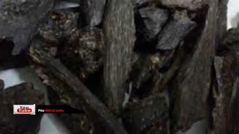 Agarwood Youtube | walla patta sri lanka agarwood youtube