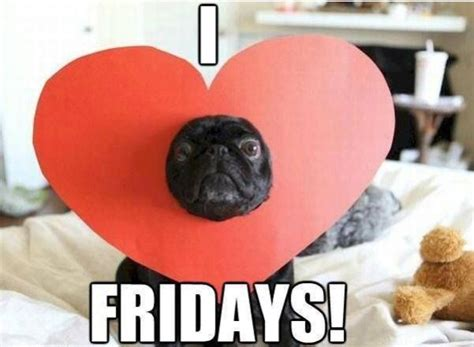 happy friday pug tgif pug memes
