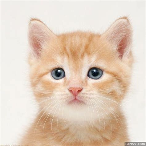 cat pictures cats images cats wallpaper and background photos