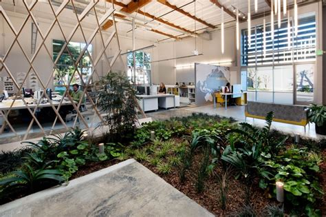 building an indoor garden contemporary office space in california blends creativity