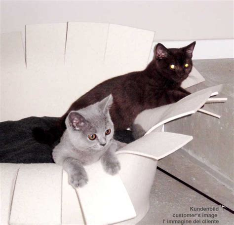 fancy cat beds fancy pet beds best quality and materials and great design