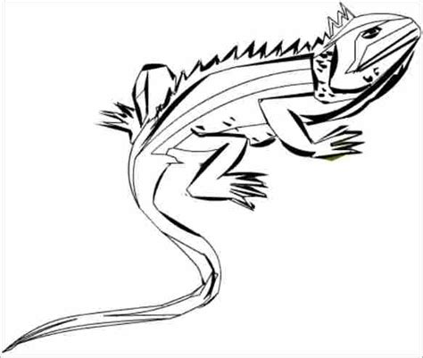 marine iguana coloring page iguana coloring pages getcoloringpages com