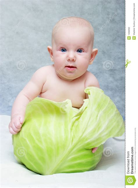 a little girl grew a 40 pound cabbage feeding 275 people baby born from cabbage stock photography image 1458202