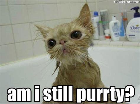 Wet Cat Meme - wet cats look so funny cuteness pinterest cats so