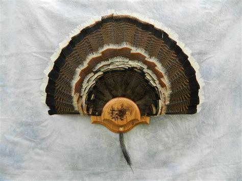 diy turkey fan mount showpiece taxidermy antler chandeliers deer hoof racks