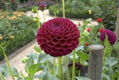 acquisto fiori comprare piante fiorista acquisto piante fioristi