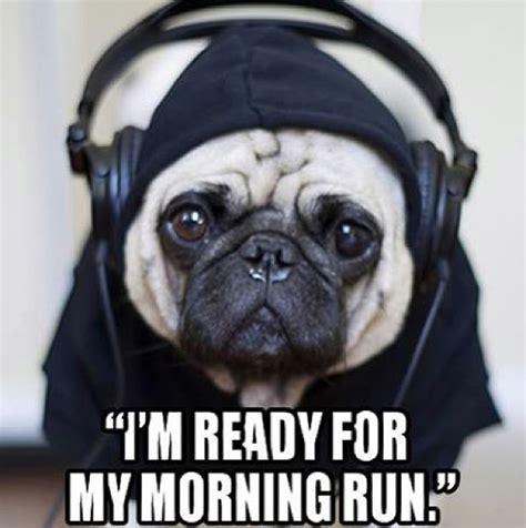 running pug goes running missing run pugs humor