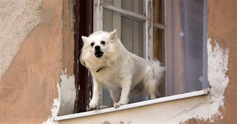 how to get to stop barking how to stop barking stop neighbors barking behavior breeds picture