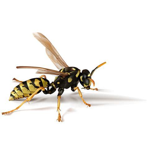 umbrella wasp pest control umbrella wasp extermination