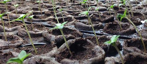 cannabis seed bank cannabis seed bank humboldt seeds uk