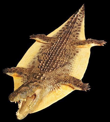crocodile rug products