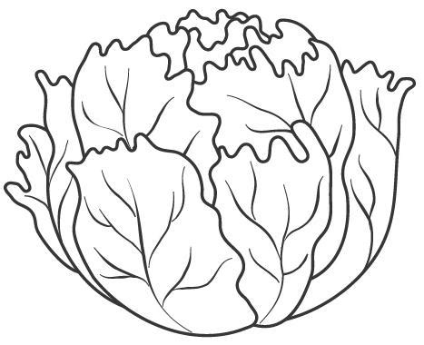 lettuce leaf coloring page image gallery lettuce coloring pages