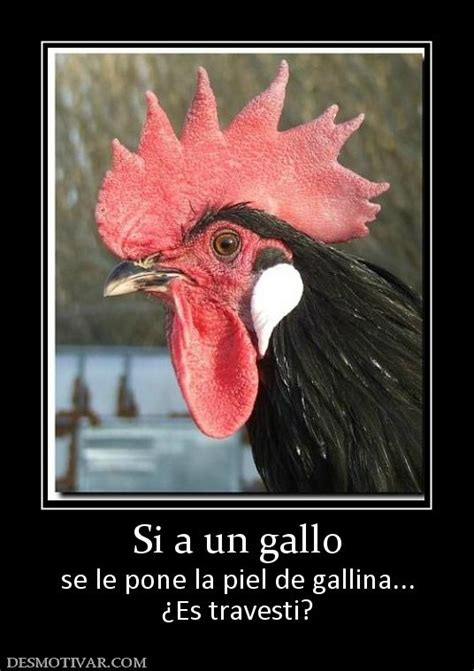 imagenes de gallos con frases newhairstylesformen2014 com imagenes de gallos con frases newhairstylesformen2014 com