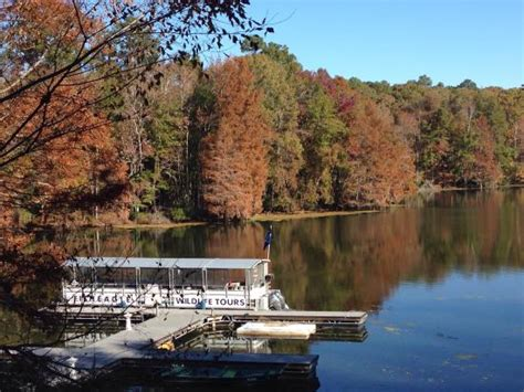 lake marion boat rentals fisheagle tours pontoon docked on lake marion picture of