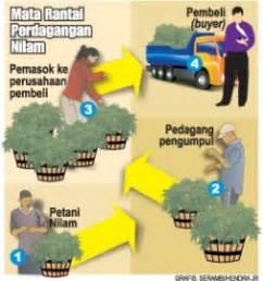 Minyak Nilam Di Medan Saat Ini kebun nilam indonesia februari 2012