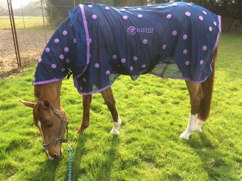 Magnetic Therapy Rugs For Horses by Magnetic Therapy For Horses Equine Magnetix