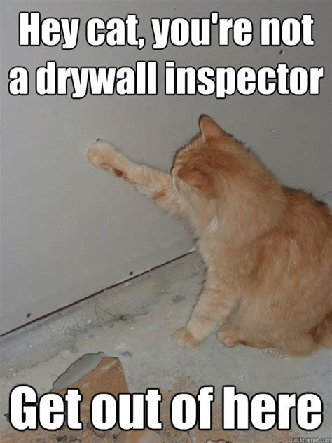 Drywall Meme - hey cat you re not a drywall inspector get out of here