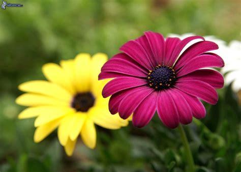 fiore viola fiore viola
