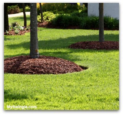 best mulch for flower beds 25 best ideas about bushes and shrubs on pinterest