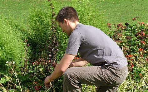 imagenes graciosas de jardineros 3 consejos para jardineros principiantes