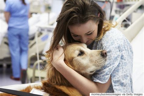 pet therapy 9 ways your knows you better than anyone else huffpost