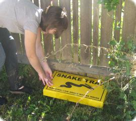 How To Catch A Snake In Your Backyard by Snake Trap Snake Removal
