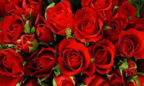nomi di fiori femminili 10 nomi femminili ispirati ai fiori greenme