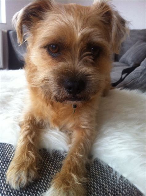 1000 images about mix of old and new on pinterest 1000 images about terrier mix on pinterest the old