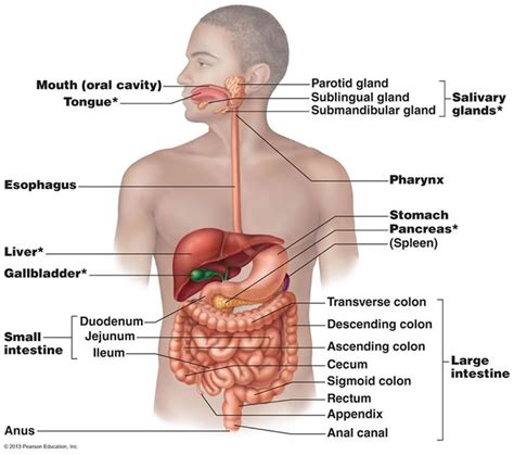 constipation after c section what to do symptoms of spleen disfunction no appetite or poor