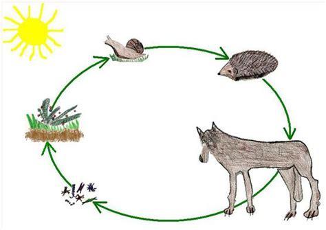 catena alimentare nel bosco una catena alimentare