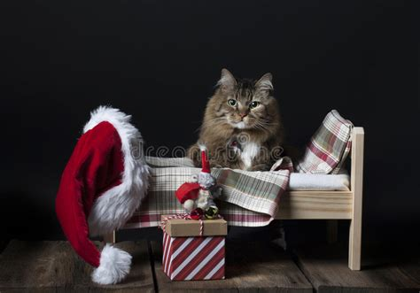 Santa Footboard by Cat Getting Into Bed Stock Photo Image 72709058