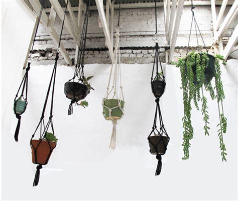 xenos hangplant doe het zelf en geef cadeau tip mooi wat planten doen