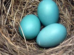 color 7fd5cd robin s egg colourlovers