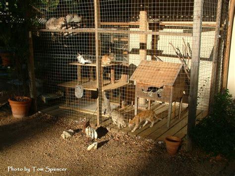 How To Build A Patio Enclosure by Cat Enclosures On Cat Enclosure Outdoor Cat