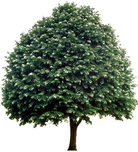 trees images raster images trees in elevation cadtutor